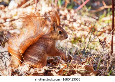 A bright sunny day in the forest red squirrel.