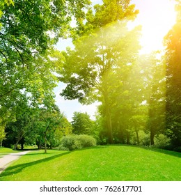 Bright sunny day in park. The sun rays illuminate green grass and trees.
