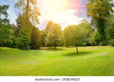 Bright sunny day in summer park. - Shutterstock ID 1938149623