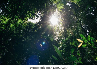 Bright and sunny light ray with flare coming through bunch of trees - green and clean energy and brighter day concept