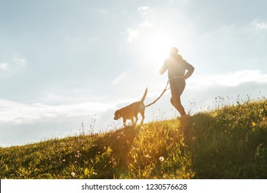 Bright sunny Morning Canicross exercises. Man runs with his beagle dog.