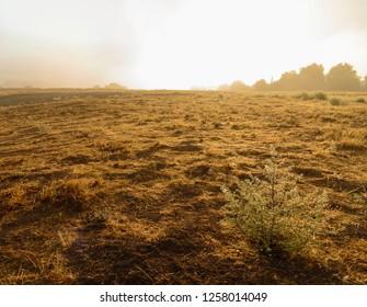 Bright sunny morning on golden empty field. Hazy sunlight.