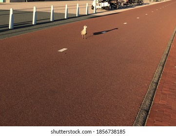 Bright sunny weather and a lonely seagull on a deserted road