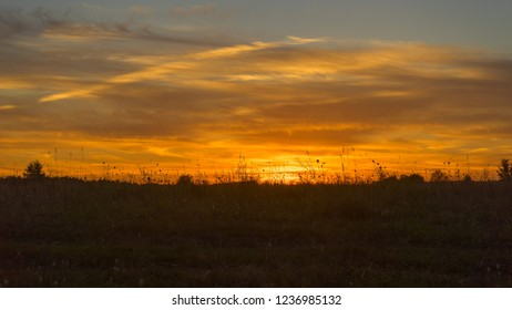 Bright sunset with grass silhouettes in foreground