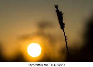 bright sunset nature flowers