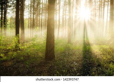 bright sunset in the woods