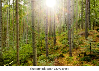 Bright sunshine in the green forest, beautiful light.