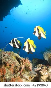 Bright tropical fish hang in the blue above coral reef