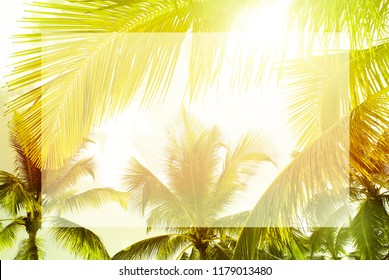 Bright tropical palm trees green & yellow sunny background with empty white transparent place for text