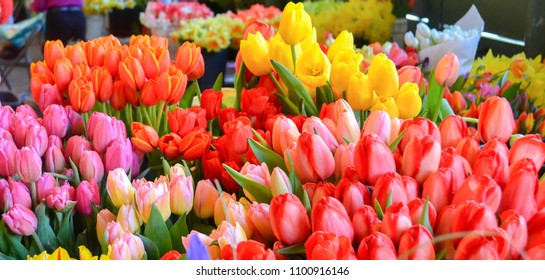 Bright Tulips and Daffodil flowers at the flower market. Location is Seattle, WA however, these beautiful bunches of color are at home anywhere!