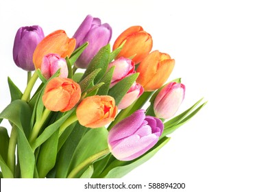 Bright various tulips on the white background