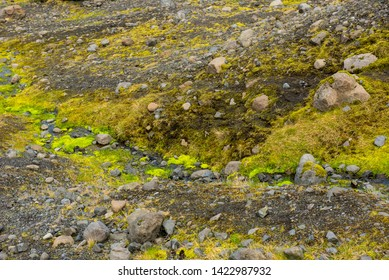 Bright vibrant green moss and grass on the volcanic rocks and soil of Iceland