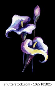 Bright watercolor callas. Watercolor flowers on black background