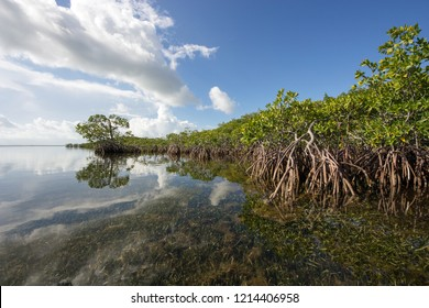 Bright white clouds reflected off an exceptionally calm South Biscayne Bay off the mangrove coast of Card Sound, Florida just west of Key Largo.