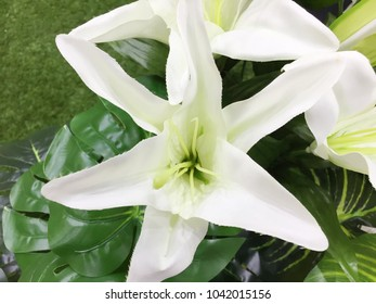 Bright white lily in the garden