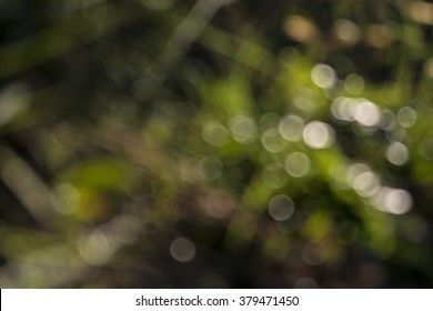 Bright, white, pink  and green sunny trees fall bokeh background.
