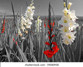 bright white and red flower blossoms in a black and white landscape