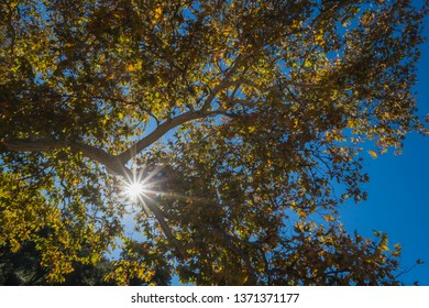 Bright white sunlight shines through the branches and leaves of a forest.