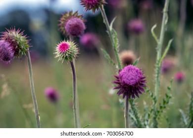 Bright Wildflowers