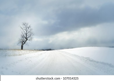 bright winter day with snow covered road and single tree and beautiful clouds