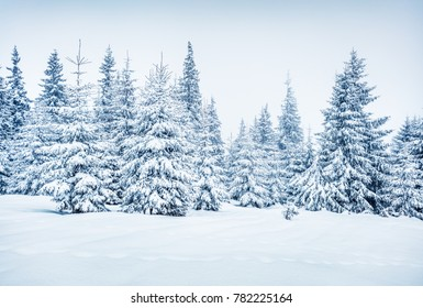 Bright winter morning in mountain forest with snow covered fir trees. Wonderful outdoor scene, Happy New Year celebration concept. Artistic style post processed photo.