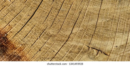 Bright wood background.