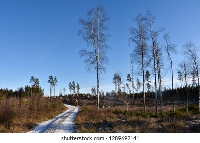 Bright woodland with a winding snowy country road