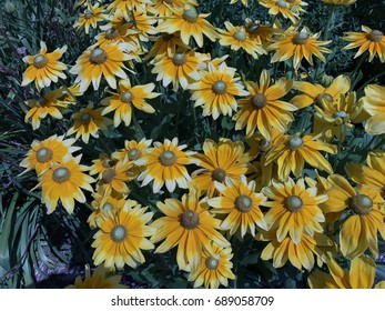 Bright Yellow bunch of Daisies