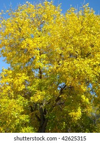 Bright yellow fall foliage against a deep blue sky