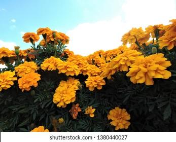 Yellow Tumblr Images, Stock Photos & Vectors   Shutterstock