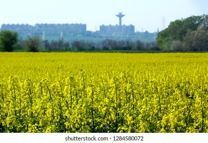 bright yellow flowering rapeseed canola or  colza field, Latin name Brassica Napus with blurry industrial background in the distance. use for cooking oil or green energy production.