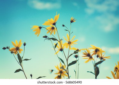 Bright yellow flowers on long stems on a blue sky background