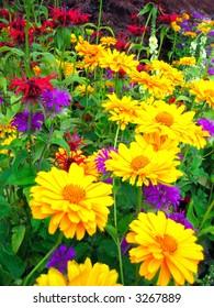 Bright yellow flowers in summer season