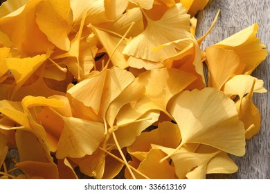Bright yellow ginkgo leaves on a wooden bench, Germany.
