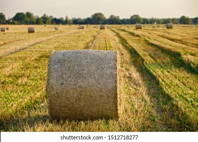 Bright yellow and golden Haystacks on agricultural field in sunny autumn day. Haystacks on the field, close-up view. Autumn nature landscapes and backgrounds. Golden Hay rolls in the countryside.