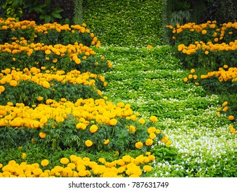 Bright yellow Marigold flowers on nature with green leaf blur background.