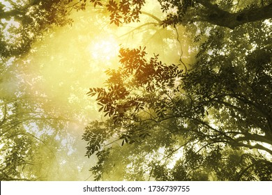 bright yellow morning light in a deep forest foggy landscape, warm yellow color tropical place .low angle view