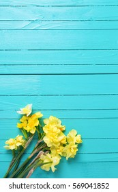 Bright yellow narcissus or daffodil flowers on aquamarine  wooden background. Selective focus. Place for text.