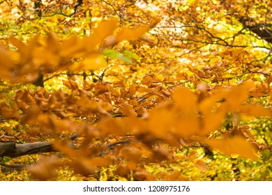 Bright yellow and orange leafs on autumn, seson trees in woodland, city park.