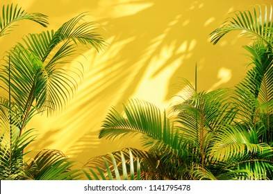 Bright yellow painted wall framed with green tropical palm leaves, sunlight with shadows patterns, summer background.