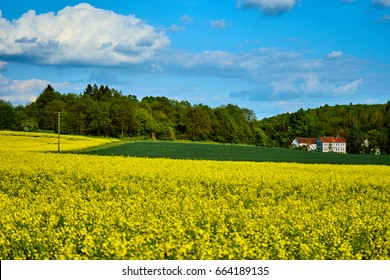 Bright yellow rape fields in foreground with some trees a house and green fields in background