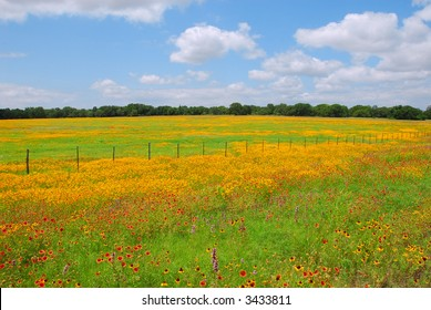 Bright yellow and red wildflowers in the Texas Hill Country with Blue Sky
