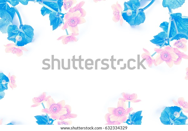 Bright yellow spring flowers on a white background.
