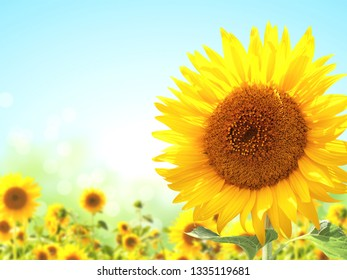 Bright yellow sunflowers on blurred sunny background. Mock up template. Copy space for text