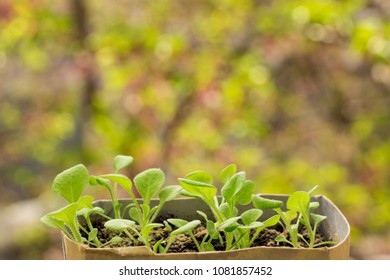 bright young shoots of petunias on a blurry background of leaves bright day