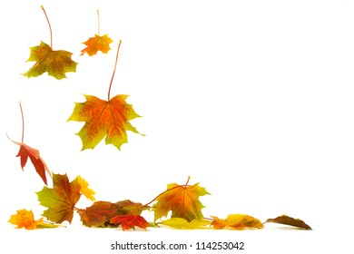 Brightly colored falling leaves isolated on white background with shadows on the ground
