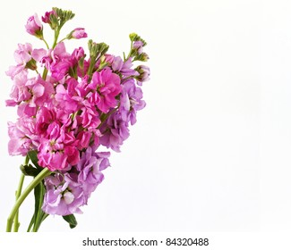 Stock flower images stock photos vectors shutterstock brightly colored flowers isolated on a white background with space for text mightylinksfo