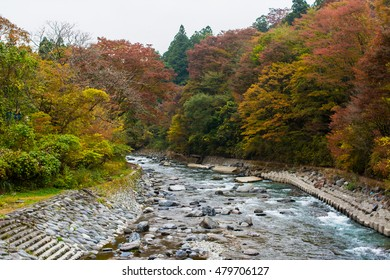 Brightly colored foliage along a river with tree, clear mountain river in autumnal japanese forest, Tochigi prefecture, Japan. image in natural light and foggy after rainy day