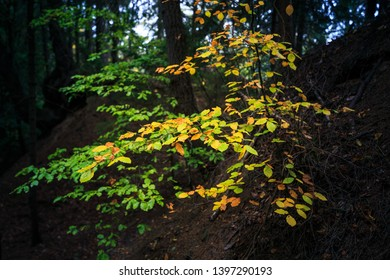 Brightly colored leaves in a dark forest look like sparks