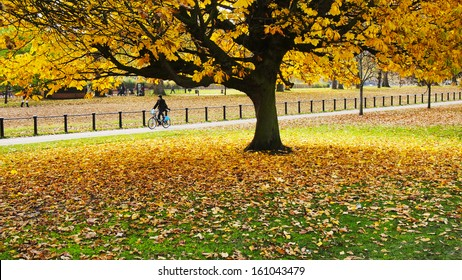 Brightly colored tree in autumn at London Hyde Park with a man riding a bike in the background